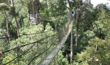 Objek Wisata Taman Hutan Hujan Tropis Bengkulu