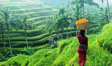 Wisata Terasiring di Ubud Bali – Sawah Bertingkat Keren