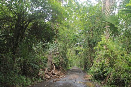 taman nasional baluran banyuwangi
